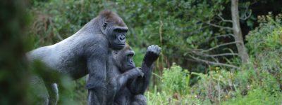 Paington-Zoo