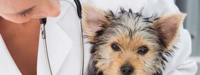 Veterinary Practice temperature monitoring